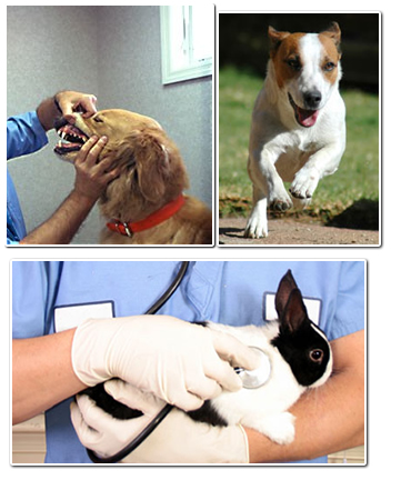 Orlando, FL - Veterinarians - Rosemont Animal Clinic